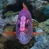 fish014