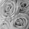 flowers2bwweb