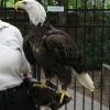 eagle013