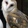 owl011