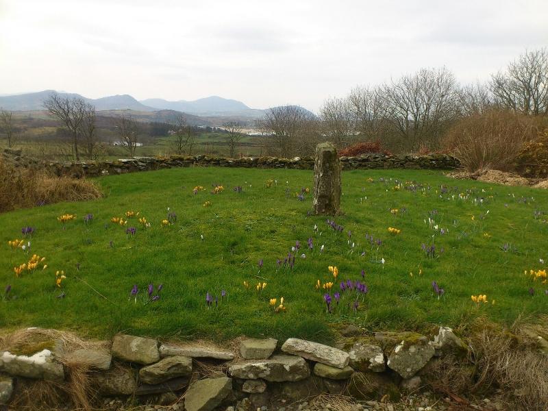 springflowers donegal inshowen