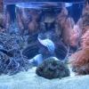 aquarium010