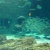 aquarium011