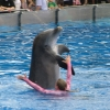dolphinshow1