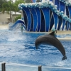 dolphinshow4