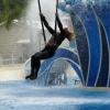 dolphinshow6