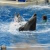 dolphinshow8