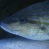 fish011