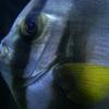 fish016