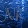 fish-1web