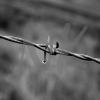 wireweb