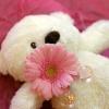 teddy1web